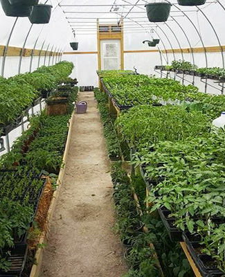 Wisely Greenhouse and Produce